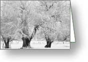 Snow Posters Greeting Cards - Three Trees in the snow - BW fine art photography print Greeting Card by James Bo Insogna