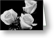 Babys Greeting Cards - Three White Beauty Roses Greeting Card by Marsha Heiken