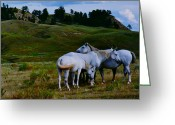 Evening Sculpture Greeting Cards - Three White Mustangs Greeting Card by Peggy Detmers