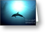 Coral Reef Greeting Cards - three year old Dolphin  Greeting Card by Hagai Nativ