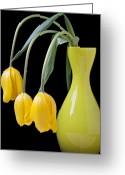Vivid Greeting Cards - Three yellow tulips Greeting Card by Garry Gay
