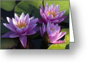Water Lilly Greeting Cards - Threes a Crowd Greeting Card by Elizabeth Chevalier