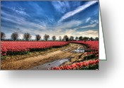 Tonemapped Greeting Cards - Through the Beauty Greeting Card by Spencer McDonald