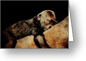Primates Greeting Cards - Through the Eyes of Hasani . Square Greeting Card by Wingsdomain Art and Photography