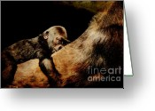 Apes Greeting Cards - Through the Eyes of Hasani Greeting Card by Wingsdomain Art and Photography