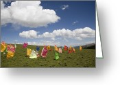 Tibetan Buddhism Greeting Cards - Tibetan Prayer Flags In A Field Greeting Card by David Evans
