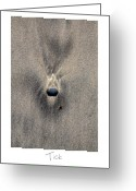 Beach Art Greeting Cards - Tick Greeting Card by Peter Tellone