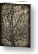 Edmonton Photographer Prints Greeting Cards - Tickle of Branches  Greeting Card by Jerry Cordeiro