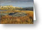 Riviere Greeting Cards - Tidal Marsh Riviere Trois Pistoles Greeting Card by Tim Fitzharris