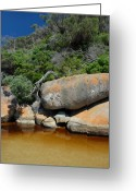 Tidal River Greeting Cards - Tidal River Greeting Card by Robert Lacy
