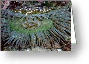 Dana Point Greeting Cards - Tide Pool Discovery Greeting Card by Jean Marshall