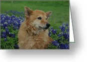 Texas.photo Photo Greeting Cards - Tiffany in Bluebonnets Greeting Card by Robyn Stacey