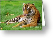 Staring Greeting Cards - Tiger Greeting Card by Carlos Caetano