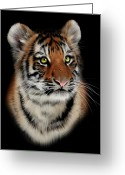 Tiger Cub Greeting Cards - Tiger Cub Portrait Greeting Card by Julie L Hoddinott