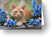 Calico Cat Greeting Cards - Tiger in the Flowers Greeting Card by Lena Auxier