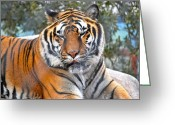 Animals Greeting Cards - Tiger Greeting Card by Kimberly Gonzales