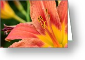 Chalice Greeting Cards - Tiger Lily Greeting Card by Paul Ward