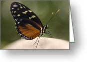 Black Wings Greeting Cards - Tiger Longwing Profile Greeting Card by Bill Tiepelman