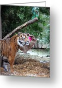 Jeremy Charles Self Greeting Cards - Tiger Love Greeting Card by Jez C Self