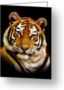 Tiger Tapestries Textiles Greeting Cards - Tiger Greeting Card by Photodream Art