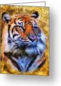 Wild Cat Greeting Cards - Tiger Portrait Greeting Card by Jai Johnson