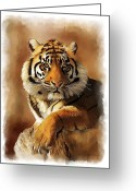 Portraits Mixed Media Greeting Cards - Tiger Portrait  Greeting Card by Michael Greenaway