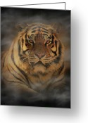 Big Cat Greeting Cards - Tiger Greeting Card by Sandy Keeton