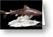 Sea Life Sculpture Greeting Cards - Tiger Shark Greeting Card by Kjell Vistnes