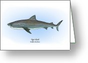 Game Drawings Greeting Cards - Tiger Shark Greeting Card by Ralph Martens