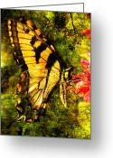Larry Walker Greeting Cards - Tiger Swallowtail Butterfly Happily Feeds Greeting Card by J Larry Walker