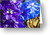 Blue Delphinium Greeting Cards - Tiger Swallowtail Delphinium Feast 2 Greeting Card by Scott Hansen