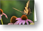 Swallow Tail Butterfly Greeting Cards - Tiger Swallowtail Greeting Card by JD Grimes