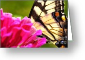 Feeding Greeting Cards - Tiger Swallowtail on Zinnia Greeting Card by Thomas R Fletcher