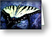 Swallow Tail Butterfly Greeting Cards - Tiger Swallowtail Greeting Card by Susie Weaver