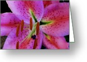 Decor Floral Picture Cards Greeting Cards - Tigerlily Magenta Center Greeting Card by Marsha Heiken