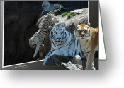 Out Of Frame Greeting Cards - Tigers Out Of Frame Greeting Card by Keith Lovejoy