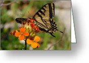 Photgraphy Greeting Cards - Tigertail Greeting Card by David Lee Thompson