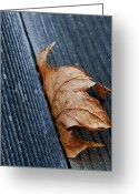Fall Photographs Greeting Cards - Tight Squeeze  Greeting Card by Steven Milner