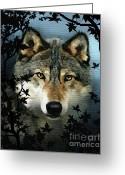 Howling Wolf Greeting Cards - Timber Wolf Greeting Card by Robert Foster