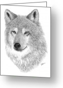 Wolves Drawings Greeting Cards - Timber Wolf Greeting Card by Rosanna Maria