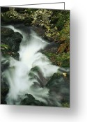Time Exposures Greeting Cards - Time Exposure Of Gushing Stream Greeting Card by Norbert Rosing