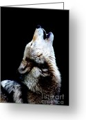 Howling Wolf Greeting Cards - Time to Howl Greeting Card by Nick Gustafson