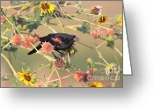 Black Bird Greeting Cards - Tinted By Sunset Greeting Card by Robert Frederick