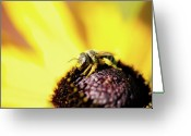 Honey Bee Greeting Cards - Tiny Bee Greeting Card by Lisa Knechtel
