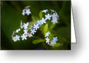 Tiny Flowers Greeting Cards - Tiny Dancers Greeting Card by Bill Pevlor