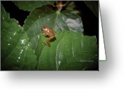 Brown Frog Greeting Cards - Tiny Escapee Greeting Card by DigiArt Diaries by Vicky Browning