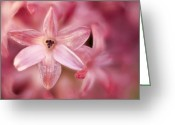 Depth Greeting Cards - Tiny Flower 2 Greeting Card by Scott Norris