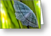 Bug Greeting Cards - Tiny Moth On A Blade of Grass Greeting Card by Bob Orsillo