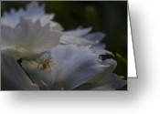 Depth Of Field Greeting Cards - Tiny Spider on White Flower Greeting Card by Scott McGuire