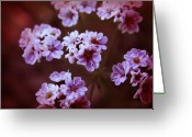 Tiny Flowers Greeting Cards - Tiny White Wild Flowers Greeting Card by Karen Musick